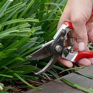 MaechlerGarten Home Gartenpflege